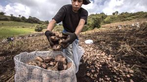 Midagri: Abastecimiento de alimentos en 2020 fue superior en 1.3% respecto al año previo pese a la pandemia