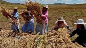 Midagri inició empadronamiento de los agricultores y sus organizaciones agrarias