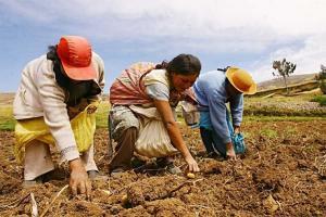 Midagri: Más de 3 mil organizaciones serían potenciales proveedores de alimentos del Estado