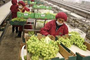 Midagri: Nueva Ley de Promoción Agraria contendrá mejoras en el aspecto laboral