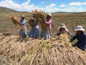 Midagri: Producción agropecuaria crece 8.8% en junio del 2021