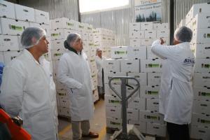 Minagri, Mincetur y OCEX buscarán nuevos mercados para el ajo