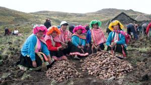 Minagri premia a 20 ganadores de la primera edición del Premio Nacional INIA-Caral 2020