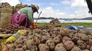 Minagri presentará marco orientador de cultivos para la campaña 2020/2021
