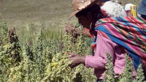 Minagri protege más de 1.500 variedades de cultivos nativos en dos zonas de agrobiodiversidad
