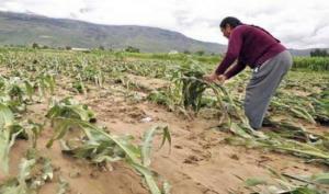 Minagri: se inicia implementación del Seguro Agrícola Catastrófico para campaña agrícola 2020-2021 en 24 departamentos del país