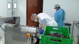 Ministerio de la Producción ayuda a productora moqueguana a transformar su materia prima en pasta de aceituna