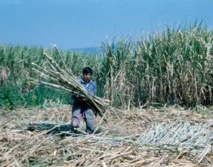 MINISTRO DE AGRICULTURA GARANTIZA QUE HAY SUFICIENTE AZÚCAR EN PERÚ