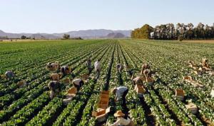 No se ha precisado con claridad cuáles son las actividades que las empresas agrarias o de alimentos pueden seguir realizando