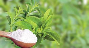 Notable caída en la exportación de stevia