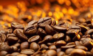 Nueva variedad de café llegará al Perú