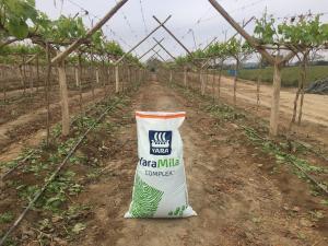 Nutrición balanceada para asegurar rendimiento y calidad en la cosecha