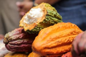 Origen del cacao estaría en Perú