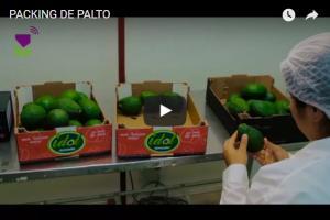 Packing de palto de Sunfruits (Video)