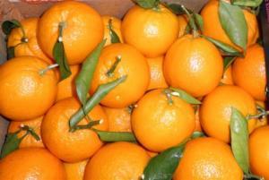 Países miembros de la Organizción Mundial de Cítricos representan el 70% de las exportaciones mundiales de esta línea de frutos