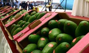 Palta Hass se ubicó dentro de los 10 principales productos de exportación de Perú durante el primer semestre del 2017