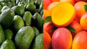 Palta, mandarina y mango son las frutas peruanas más demandas en el mercado del Reino Unido en el primer semestre