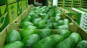 Paltas, uvas, arándanos, quinua y camarones del Perú, entre los productos con potencial comercial tras firma de TLC con Australia