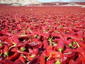 Páprika producida en Perú será más competitiva en mercados internacionales