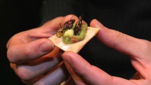 Para la FAO, los insectos son el alimento del futuro