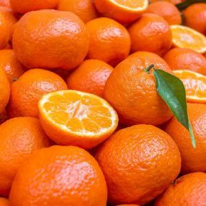 Partió primer envío de mandarinas Satsuma peruanas rumbo a Japón