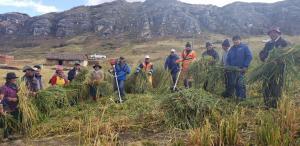 Pasco: productores ganaderos reciben motoguadañas para corte y conservación de forraje