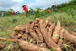 Pequeños agricultores accederán a tasas de interés de entre 10% y 12%