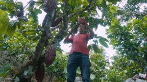 Pequeños cacaoteros de la selva peruana realizan pasantía a empresas comercializadoras de cacao y chocolate