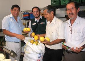 Pequeños productores de maracuyá y papaya del Valle de Motupe logran colocar sus productos en importante cadena de supermercados