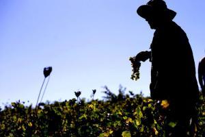 Perú apuesta por el vino como nueva arma para potenciar el boom gastronómico