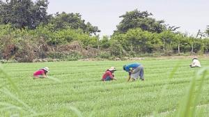 Perú elevó sobretasa para importación de arroz y activó preocupación en Uruguay