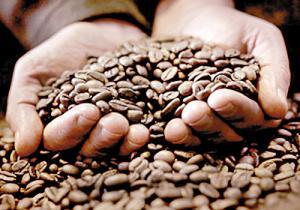 Perú es el segundo exportador de café orgánico del mundo