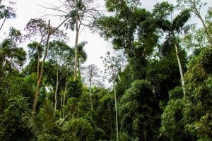 Perú llega al millón de hectáreas de manejo forestal certificadas FSC