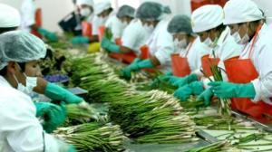Perú podría recuperar primer lugar como exportador de espárragos a fin de año