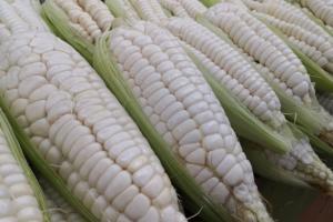 Perú produjo 414 mil toneladas de maíz choclo en el 2020