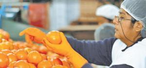 Perú puede llegar al 2021 con exportaciones por US$ 4,230 millones solo en frutas y hortalizas