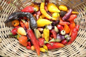 Perú puede mejorar su posicionamiento como proveedor mundial de pimientos y ajíes