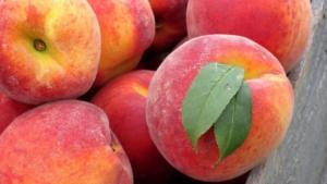 Perú reabre temporalmente su mercado a los carozos de Chile