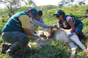 Perú refuerza medidas sanitarias ante nuevo caso de fiebre aftosa en Colombia