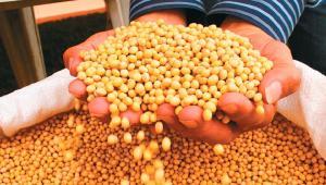 Perú suspende importación de productos agropecuarios procedentes de Bolivia