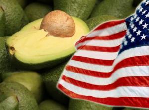 Perú triplicó exportaciones de palta Hass a Estados Unidos