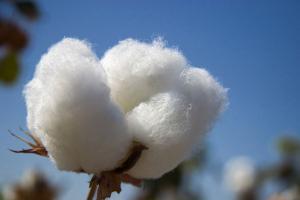 Piloto de eficiencia hídrica utilizará menos agua y mejorará productividad en algodón