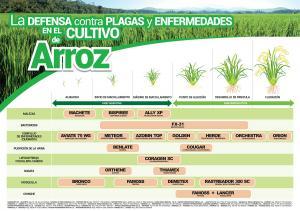 Plaga, enfermedades y malezas pueden causar pérdidas en promedio de 30% en el rendimiento productivo del arroz