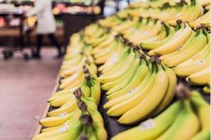 Plátano Cavendish está en peligro de extinción