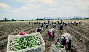 Pleno del Congreso aprobó nueva ley agraria que establece una bonificación especial de S/ 279 al mes