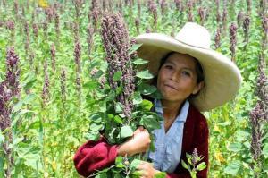 """""""Por sus características nutricionales y por ser un cultivo resiliente, la quinua está llamada a ser el alimento del milenio"""""""