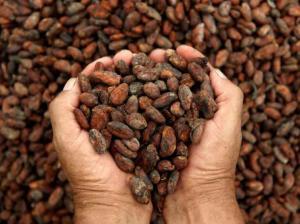 Precio del cacao sigue creciendo