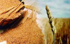 Precio del trigo baja a su menor nivel en una década