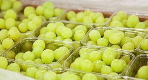 Preocupación por superposición de ofertas de uva peruana y chilena en los principales mercados