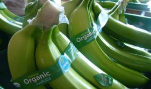 Primer despacho de banano orgánico peruano llegó a Portugal